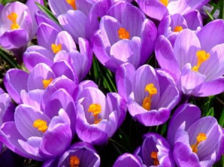 Wiosna w grafice SmartArt .